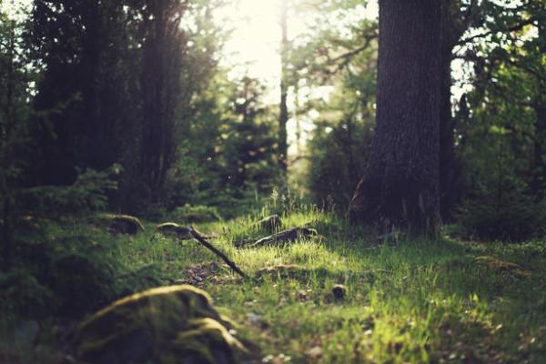 naturee